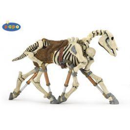 Ivana Kohoutová Kůň Skeleton