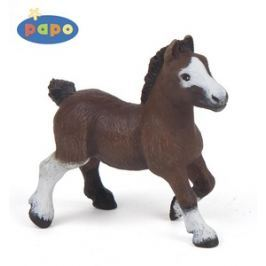 Ivana Kohoutová Pony shetlandský hříbě