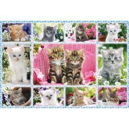 SCHMIDT Puzzle Koťata 100 dílků