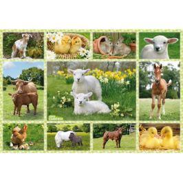 SCHMIDT Puzzle  56194 Mláďata na farmě 100 dílků