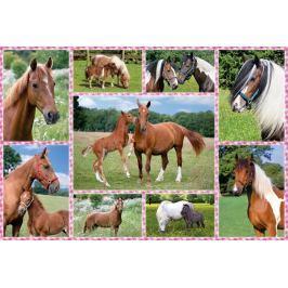 SCHMIDT Puzzle Nádherní koně 150 dílků
