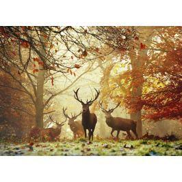 HEYE Puzzle Stádo jelenů 1000 dílků