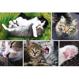 TREFL Puzzle Kočičí záležitost 1500 dílků