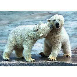 TREFL Puzzle  37270 Polární medvědi 500 dílků
