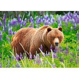 CASTORLAND Puzzle Medvěd na louce 120 dílků