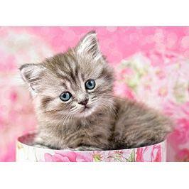 CASTORLAND poškozený obal:  Dětské puzzle 35 dílků - Kotě v krabici