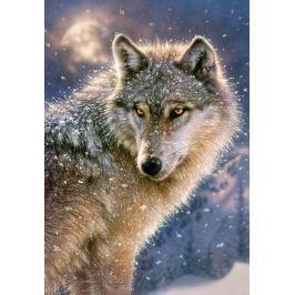 CASTORLAND Puzzle  500 dílků - Osamělý vlk