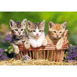 CASTORLAND Puzzle Tři roztomilá koťátka 500 dílků