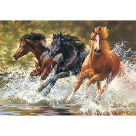 CASTORLAND Puzzle  500 dílků - Koně ve vodě