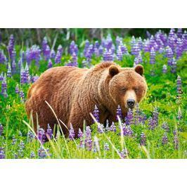 CASTORLAND Puzzle Medvěd na louce 500 dílků