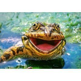 CASTORLAND Puzzle Usměvavá žába 500 dílků