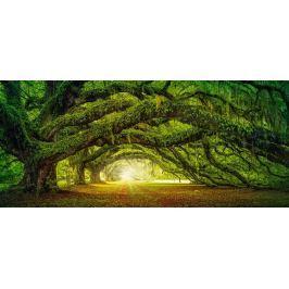 CASTORLAND Panoramatické puzzle Lesní cesta 600 dílků