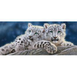 CASTORLAND Panoramatické puzzle Mláďata sněžného leoparda 600 dílků