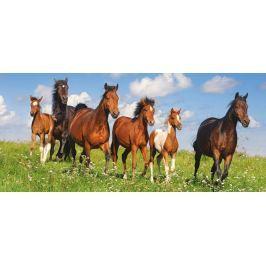CASTORLAND Panoramatické puzzle Běžící stádo koní 600 dílků