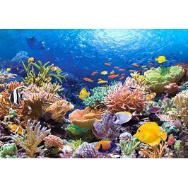 CASTORLAND Puzzle  1000 dílků - Korálový útes