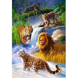 CASTORLAND Puzzle  1000 dílků - Velké kočky