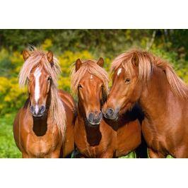 CASTORLAND Puzzle Koňské přátelství 1000 dílků