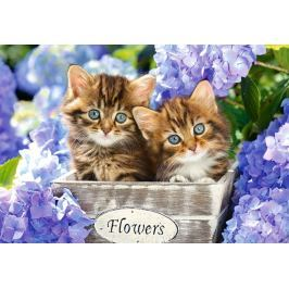 CASTORLAND Puzzle Roztomilá koťata 1500 dílků