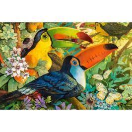 CASTORLAND Puzzle  3000 dílků - Barevní tukani