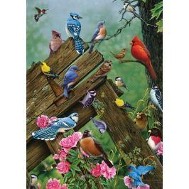 COBBLE HILL Puzzle  57190 J. Gadamus: Lesní ptáci 1000 dílků