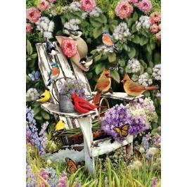 COBBLE HILL Puzzle  57191 Ptáci z Adirondackého pohoří v létě 1000 dílků