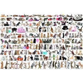 EUROGRAPHICS Puzzle Svět koček 2000 dílků