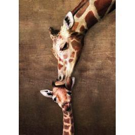 EUROGRAPHICS Puzzle  1000 dílků - Polibek žirafy