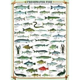 EUROGRAPHICS Puzzle  1000 dílků - Sladkovodní ryby