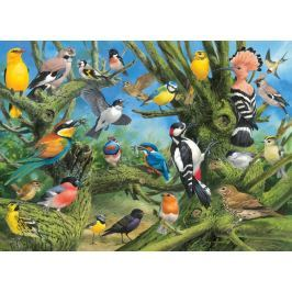 EUROGRAPHICS Puzzle Ptáci v zahradě 1000 dílků