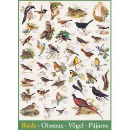EUROGRAPHICS Puzzle Ptáci 1000 dílků