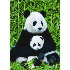 EUROGRAPHICS Puzzle  1000 dílků : Panda a mládě