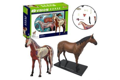 4D MASTER Anatomický model 4D  Kůň 26 dílků Puzzle